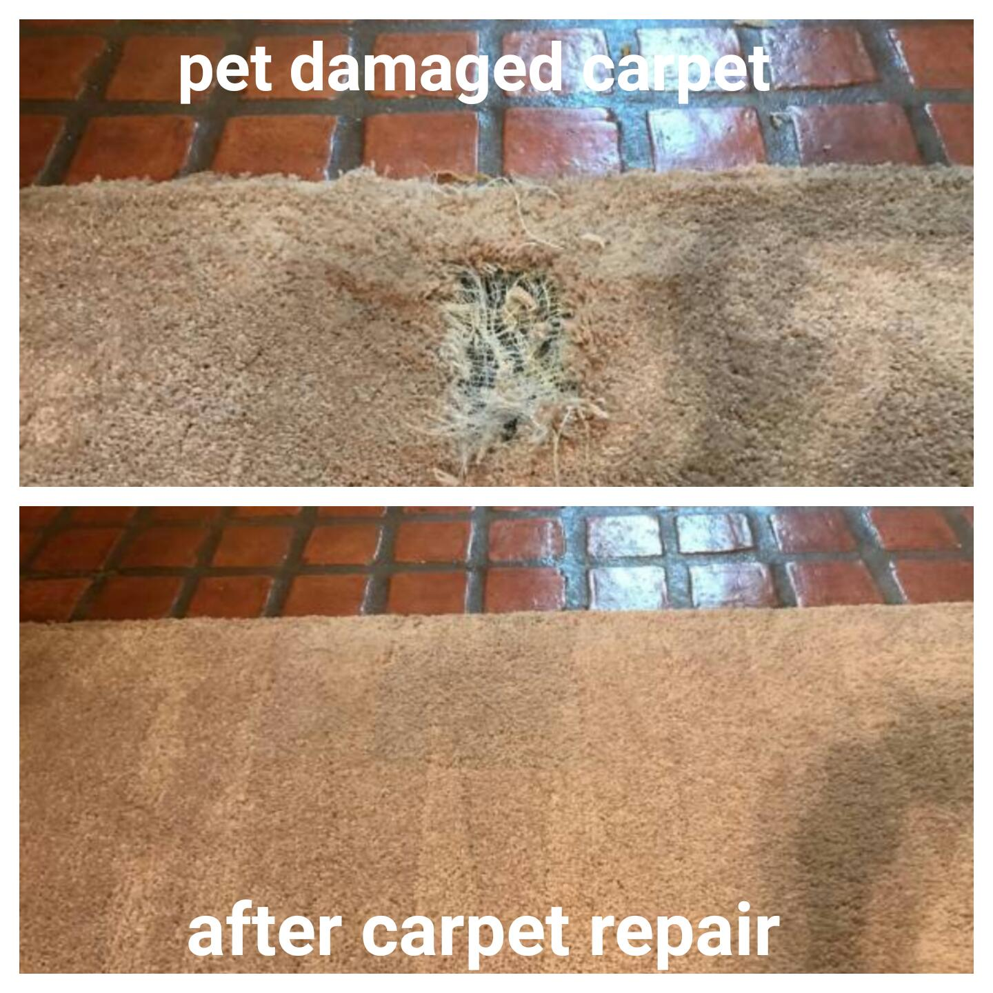Pet Damage Carpet